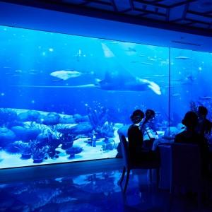 ラディア 水族館